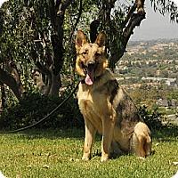 Adopt A Pet :: Adriana - Laguna Niguel, CA