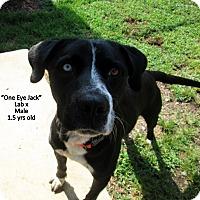 Adopt A Pet :: Jack - Gadsden, AL