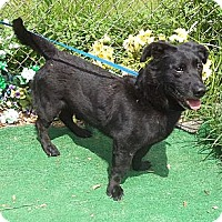 Adopt A Pet :: Augie - Wonderful Active Boy! - Quentin, PA