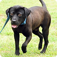Adopt A Pet :: Major - Lewisville, IN