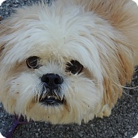 Adopt A Pet :: Roonie discounted - Allentown, PA