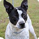 Adopt A Pet :: Piper Michelle