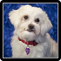 Adopt A Pet :: Marina - San Diego, CA