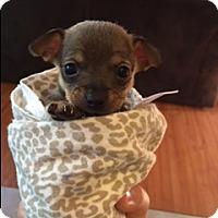 Adopt A Pet :: RUDY - Rancho Cucamonga, CA