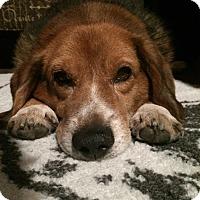 Adopt A Pet :: Jorge Hughes - Waldorf, MD