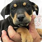 Adopt A Pet :: Manchester