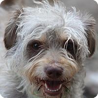 Adopt A Pet :: Swanson - Woonsocket, RI