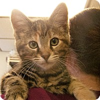 Adopt A Pet :: Lulu - Toledo, OH