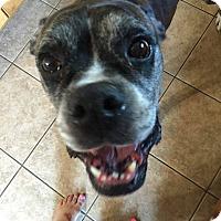 Adopt A Pet :: Mack - Boise, ID