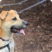 Adopt A Pet :: Troy - Morganville, NJ