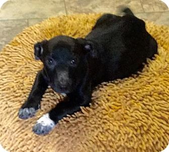 Terrier (Unknown Type, Medium) Mix Puppy for adoption in Livingston, Texas - Alexa