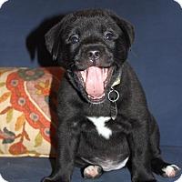 Adopt A Pet :: Jenny - Huntsville, AL