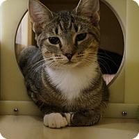 Adopt A Pet :: Duncan and Hershey - Salem, NH