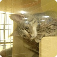 Adopt A Pet :: Tank - Northfield, OH