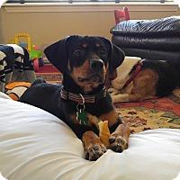 Adopt A Pet :: Luna - Alpharetta, GA