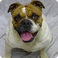 Adopt A Pet :: April - Santa Ana, CA