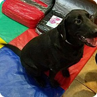 Adopt A Pet :: Shadow - Savannah, GA