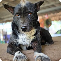 Terrier (Unknown Type, Medium) Mix Dog for adoption in Boulder, Colorado - Moon