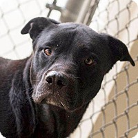 Adopt A Pet :: Tyson ~ CRITICAL Available NOW - Nashville, NC