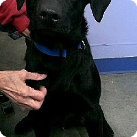 Adopt A Pet :: Coal - Aurora, IL