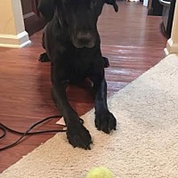 Adopt A Pet :: King - Atlanta, GA