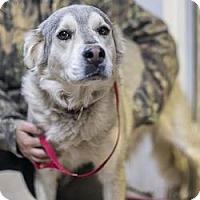 Adopt A Pet :: Diamond - Lakewood, CO
