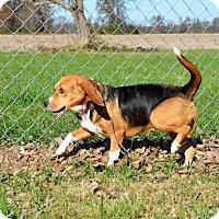 Adopt A Pet :: Ethel - DuQuoin, IL