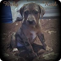 Adopt A Pet :: Baby Ruth - Denver, NC