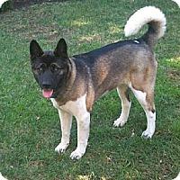 Adopt A Pet :: Cleo - Adopted! - Hayward, CA
