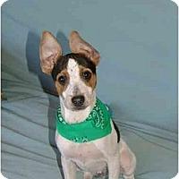 Adopt A Pet :: Harley - Glastonbury, CT