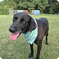 Adopt A Pet :: Gypsy - Conway, AR