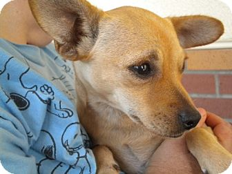 Chihuahua/Terrier (Unknown Type, Medium) Mix Dog for adoption in Fresno, California - Cassie