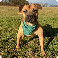 Adopt A Pet :: GIOVANNI - New Cumberland, WV
