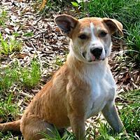 Adopt A Pet :: Buddy - Branford, CT