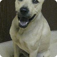 Adopt A Pet :: Zues - Gary, IN