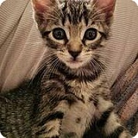 Adopt A Pet :: Strawberry - New York, NY