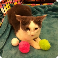 Adopt A Pet :: Woodstock - Northfield, OH
