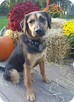 German Shepherd Dog/Shepherd (Unknown Type) Mix Dog for adoption in Oakland, Michigan - Maddie