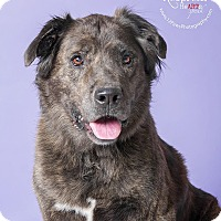 Adopt A Pet :: MEMPHIS - Apache Junction, AZ