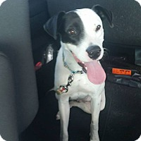 Adopt A Pet :: Jazzy - Englewood, FL