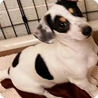 Adopt A Pet :: Penny's Snoopy - Las Vegas, NV