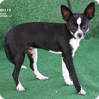 Adopt A Pet :: *BRANDON - Hanford, CA
