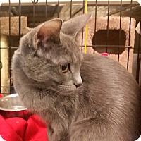 Adopt A Pet :: Piper - Lancaster, CA