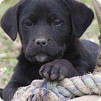 Adopt A Pet :: Nero - Bedford, IN