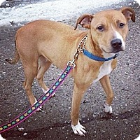 Adopt A Pet :: Duchess (Courtesy) - South Park, PA