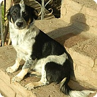 Adopt A Pet :: Jasmin - San Ysidro, CA