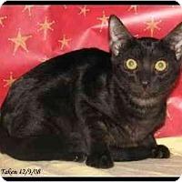 Adopt A Pet :: Poe - Orlando, FL