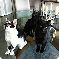 Adopt A Pet :: Jackson - Beverly Hills, CA