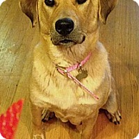 Adopt A Pet :: Summer - North Olmsted, OH