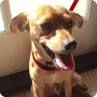 Adopt A Pet :: Zeppelin - Santa Ana, CA